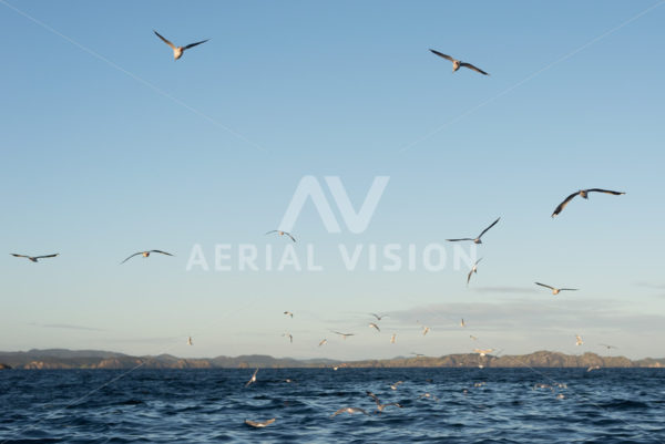 Bay of Islands Water with Birds - Aerial Vision Stock Imagery