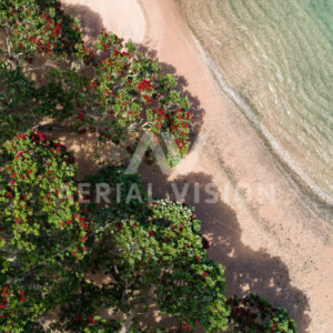 Beach with Pohutukawa - Aerial Vision Stock Imagery