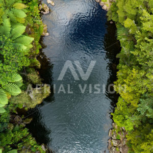 River and Punga Trees Top-down - Aerial Vision Stock Imagery