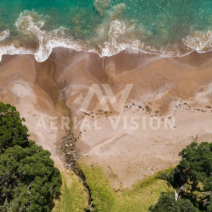 Sandy Beach With Grass Top-down - Aerial Vision Stock Imagery