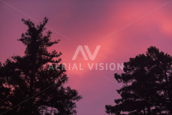 Tree silhouette with pink sunset - Aerial Vision Stock Imagery