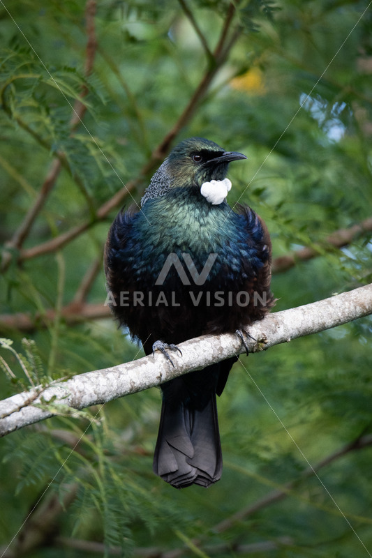 Tui - Aerial Vision Stock Imagery
