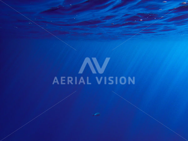 Underwater with rays - Aerial Vision Stock Imagery