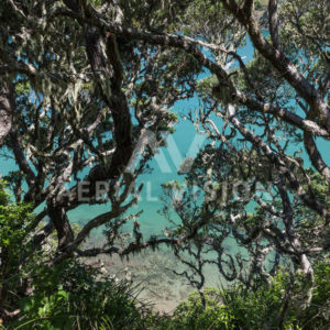 Water view through Pohutukawa Trees – Landscape - Aerial Vision Stock Imagery